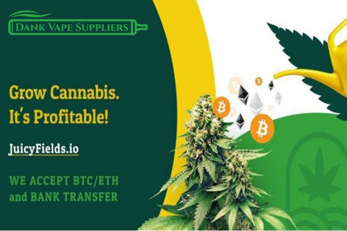 JuicyFields is proud to connect marijuana buyers, sellers, producers, activists, and enthusiasts from around the world on one of Crowdgrowing's first legal platforms