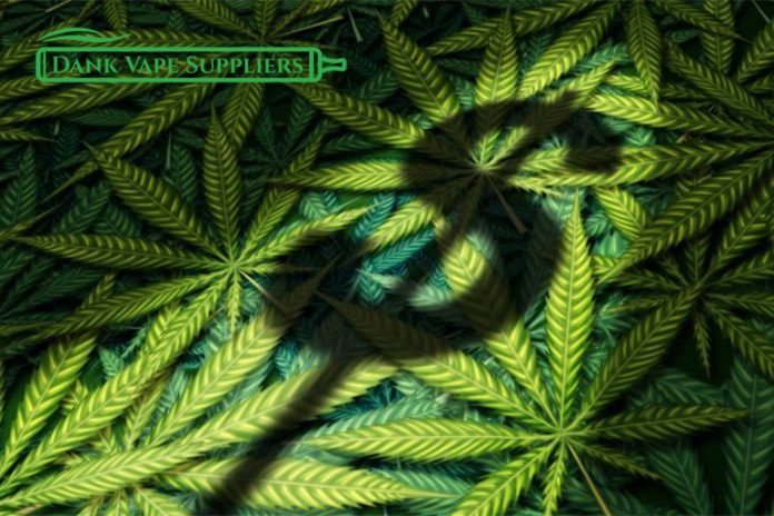 Cannabis is big Business